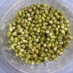 Moje experimenty s nakličováním semínek