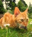 kočka s myší