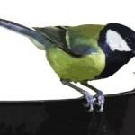 Už jste nakrmili své zahradní ptáčky?