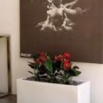 Samozavlažovací květináče