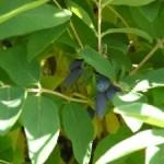 První letošní ovoce
