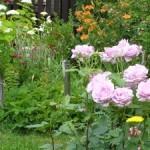 Moje červnová zahrada v obrázcích