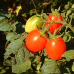 Zelenina a ovoce hezky česky