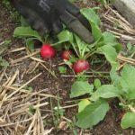 Nová zahrada přinesla první úrodu