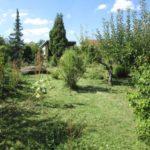 Naposledy jsme sekali starou zahradu