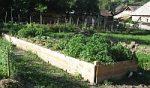 Zahrada nejsou náklady, zahrada jsou výnosy