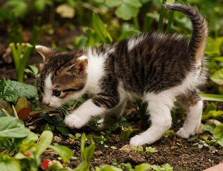 Jak ochránit rostliny před kočkami